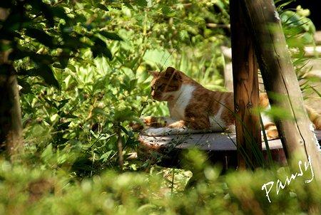 長月 浄智寺の猫・・