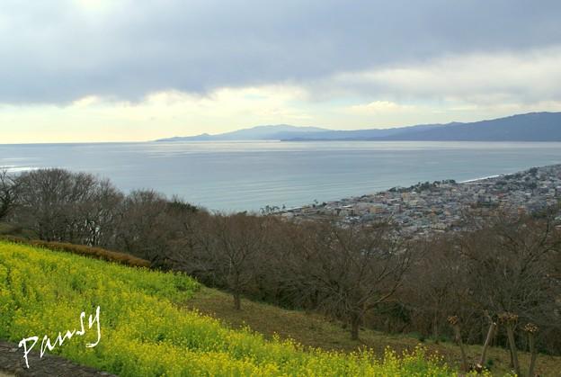 写真: 菜の花咲く・・吾妻山公園 6
