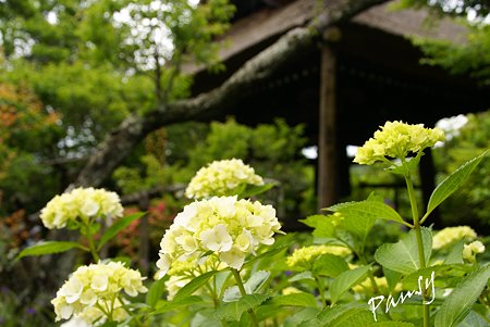 風待月の東慶寺・・17
