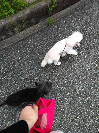 2頭揃っての散歩