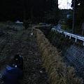 ハサがけ'09 (44)