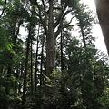 写真: 100513-28高千穂神社の杉(下部)