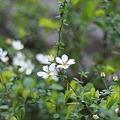 写真: 塀の所に咲いてた