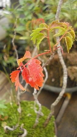 盆栽鉢の秋…