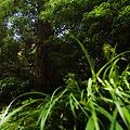 Photos: 緑茂る