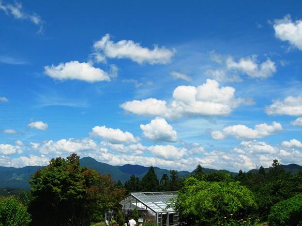 ハーブガーデンの夏空~香木の森~