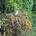 Photos: 白い鳥
