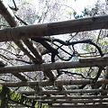 11.04.25.久伊豆神社(越谷市)