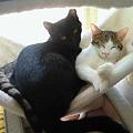 写真: 猫ハンモック、そろそろそれ...