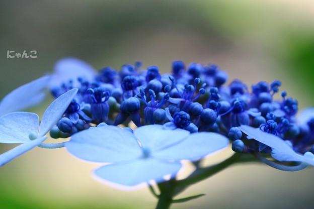 写真: ~青藍~