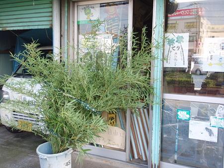 七夕の竹4