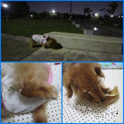 20111006 お散歩