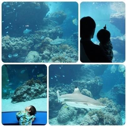 20120603 美ら海水族館1