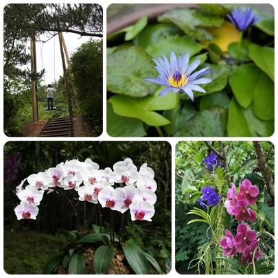 20120604 園内の花たち
