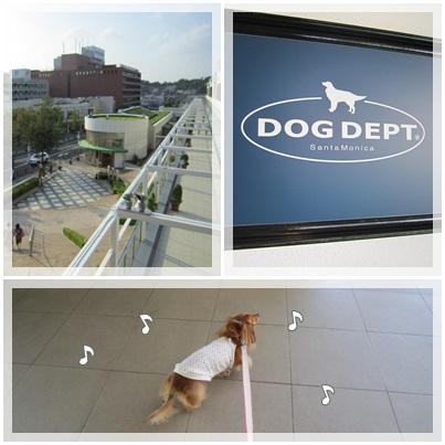 20110828 DOG DEPT1