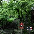 長谷寺 登廊 新緑の中で