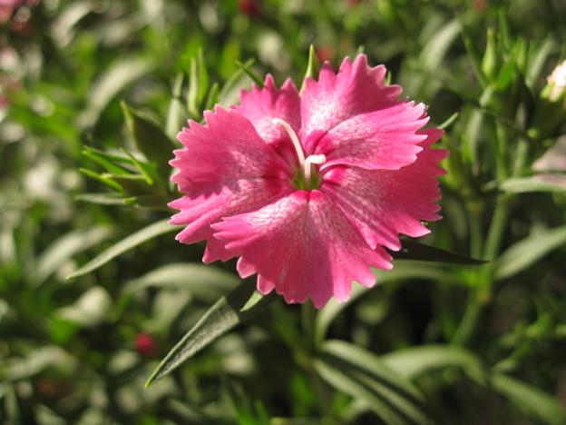 Flower Jewel 翡翠(かわせみ) - 写真共有サイト「フォト蔵」