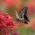蝶よ花よと・・