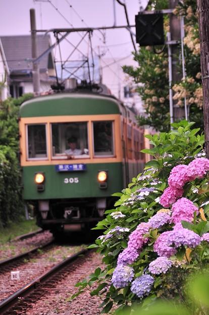 御霊神社の踏み切りから江ノ電300形と紫陽花・・20120619