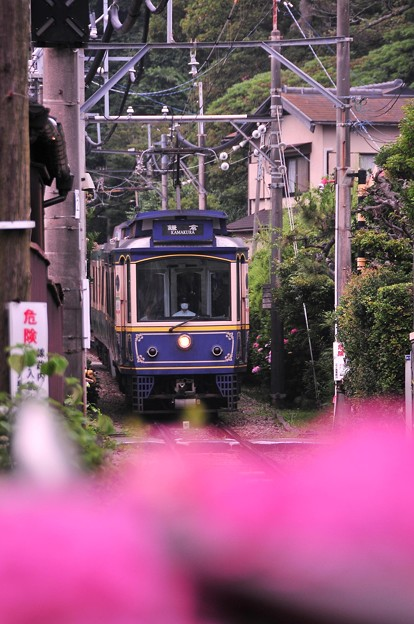 長谷駅付近の紫陽花と江ノ電レトロ車・・20120619