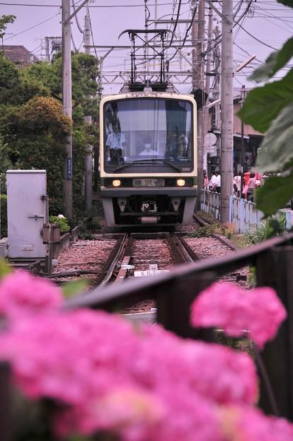 長谷駅を出発して紫陽花と江ノ電2000形・・20120619