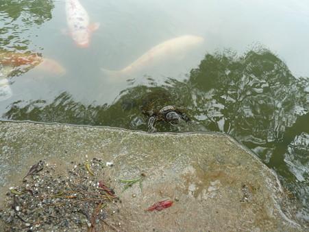 20120714_栗林公園 (4)