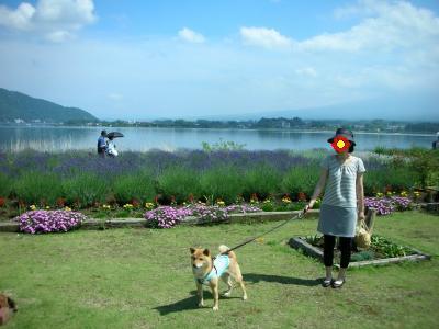 富士山は見えず・・・