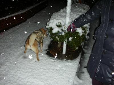 凄い雪・・・