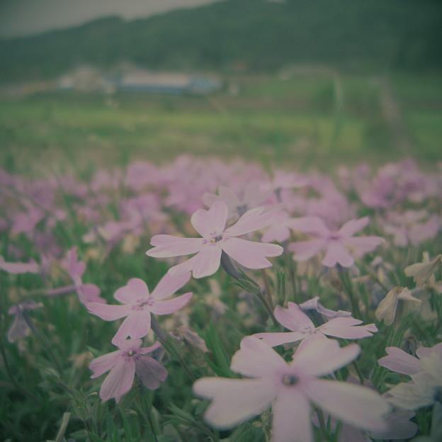 写真: RIMG0508_001
