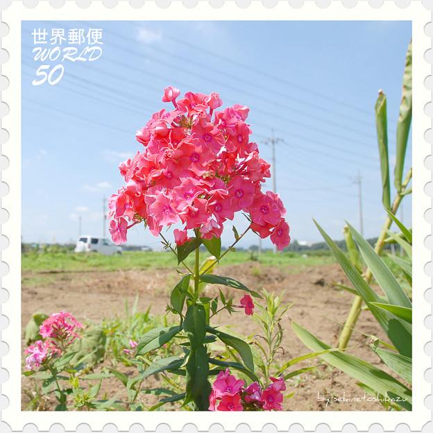 <花切手*花魁草 in 2010>