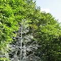 Photos: ガラスの樹