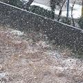 写真: 雪!